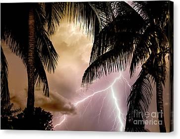 Fire Under The Palms Canvas Print by Jon Neidert