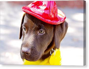 Firefighter Pup Canvas Print