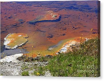 Firehole Lake Yellowstone National Park Canvas Print by Louise Heusinkveld