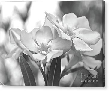 Canvas Print featuring the photograph Firewalker Sw1 by Wilhelm Hufnagl