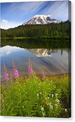 Fireweed Reflections Canvas Print by Mike  Dawson