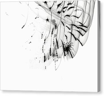 Firework Abstract 5 Canvas Print