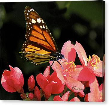 First Day Of Spring Canvas Print by Elorian Landers