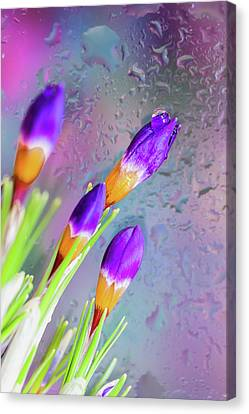 First Day Of Spring Canvas Print by Svetlana Iso