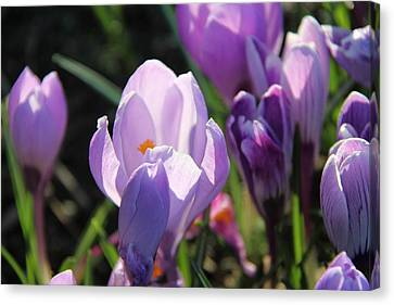 Canvas Print featuring the photograph First Flowers by Sergey and Svetlana Nassyrov