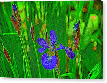 First Iris To Bloom Canvas Print by Dennis Lundell