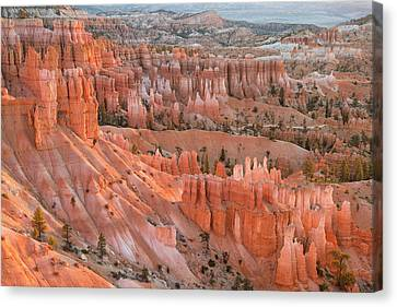 First Light, Bryce Canyon National Park Canvas Print
