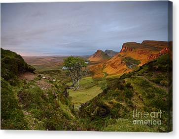 First Light Canvas Print by Nichola Denny
