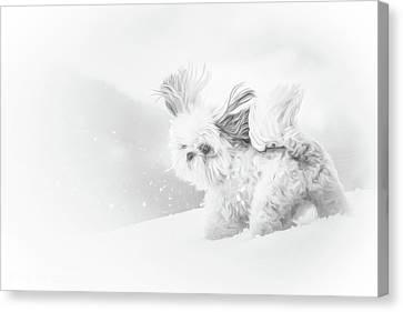 Shihtzu Canvas Print - First Snow by Joy McAdams