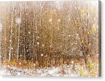 First Snow. Snow Flakes I Canvas Print by Jenny Rainbow