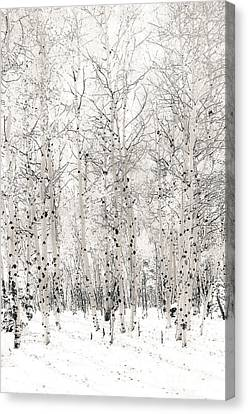 First Snow Canvas Print by The Forests Edge Photography - Diane Sandoval