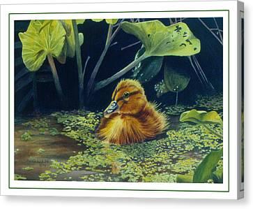 First Spring - Mallard Duckling Canvas Print