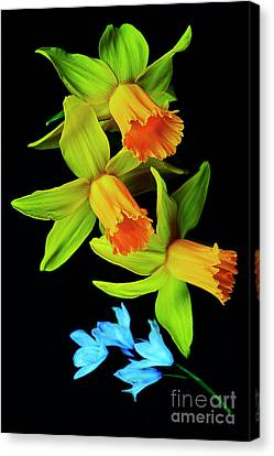 First Spring Flowers #2. Canvas Print by Alexander Vinogradov