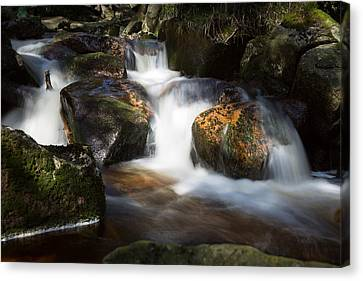 first spring sunlight on the Warme Bode, Harz Canvas Print