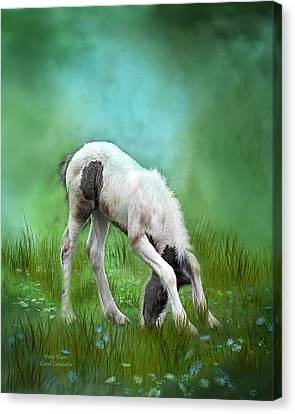 First Taste Canvas Print by Carol Cavalaris