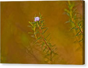 First To Flower Canvas Print