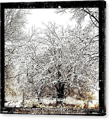 First Winter Snow Canvas Print by Marsha Heiken