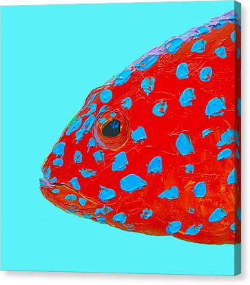 Fish Art - Strawberry Grouper Canvas Print by Jan Matson