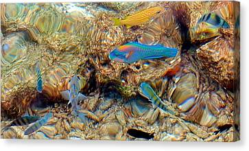 Fish Canvas Print by Betty Buller Whitehead