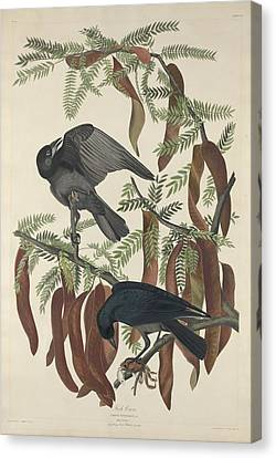 Fish Crow Canvas Print by Rob Dreyer