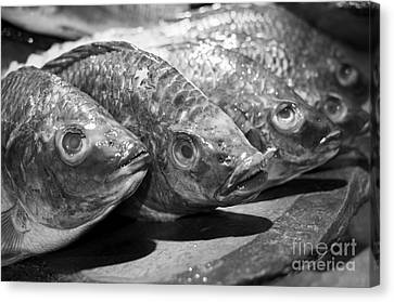 Canvas Print featuring the photograph Fish by Dean Harte