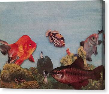 Fish Eating Cats. Canvas Print by William Douglas