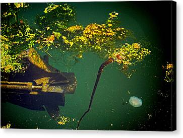 Canvas Print featuring the photograph Fish Eye View by Dale Stillman