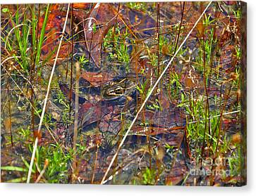 Canvas Print featuring the photograph Fish Faces Frog by Al Powell Photography USA