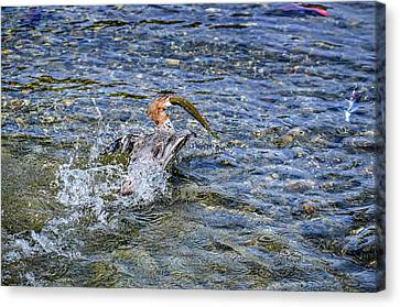 Canvas Print featuring the photograph Fish Gulp by David Lawson