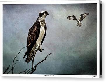 Fish Hawks Canvas Print