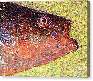 Fish Head Canvas Print by Wingsdomain Art and Photography