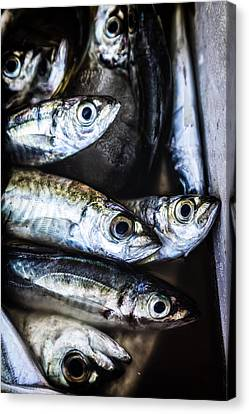 Thriller Canvas Print - Fish by Joana Kruse