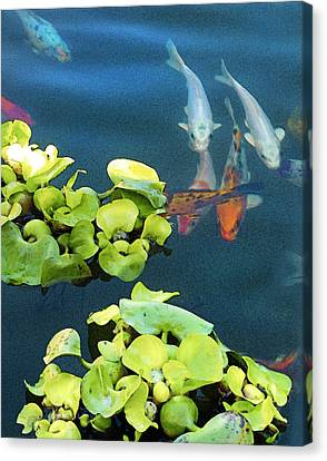 Fish-koi In A Pond, Triptych Part 1 Canvas Print