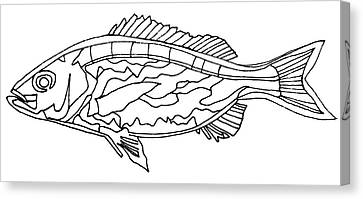 Fish Lines Canvas Print by Baya Clare