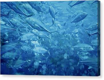 Fish Schooling Harmonious Patterns Throughout The Sea Canvas Print by Christine Till