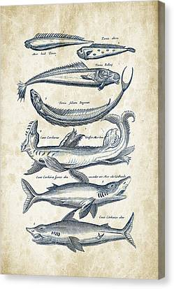 Saltwater Fishing Canvas Print - Fish Species Historiae Naturalis 08 - 1657 - 06 by Aged Pixel