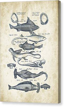 Saltwater Fishing Canvas Print - Fish Species Historiae Naturalis 08 - 1657 - 07 by Aged Pixel
