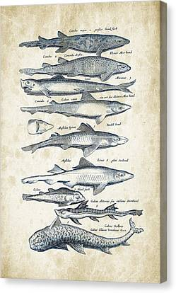 Saltwater Fishing Canvas Print - Fish Species Historiae Naturalis 08 - 1657 - 08 by Aged Pixel