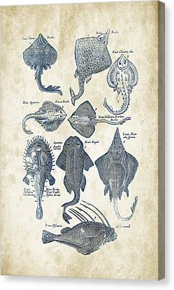 Saltwater Fishing Canvas Print - Fish Species Historiae Naturalis 08 - 1657 - 11 by Aged Pixel