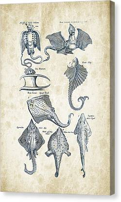 Saltwater Fishing Canvas Print - Fish Species Historiae Naturalis 08 - 1657 - 12 by Aged Pixel