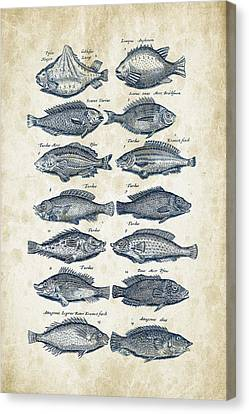 Fish Species Historiae Naturalis 08 - 1657 - 13 Canvas Print by Aged Pixel