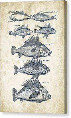 Fish Species Historiae Naturalis 08 - 1657 - 16 Canvas Print by Aged Pixel