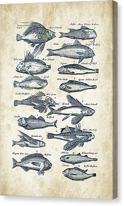 Saltwater Fishing Canvas Print - Fish Species Historiae Naturalis 08 - 1657 - 17 by Aged Pixel