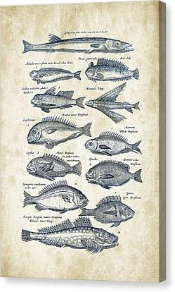 Saltwater Fishing Canvas Print - Fish Species Historiae Naturalis 08 - 1657 - 18 by Aged Pixel