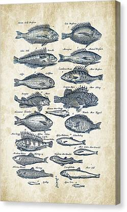 Saltwater Fishing Canvas Print - Fish Species Historiae Naturalis 08 - 1657 - 19 by Aged Pixel