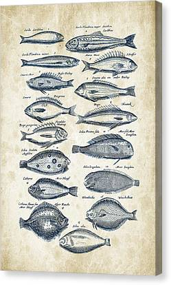 Saltwater Fishing Canvas Print - Fish Species Historiae Naturalis 08 - 1657 - 20 by Aged Pixel