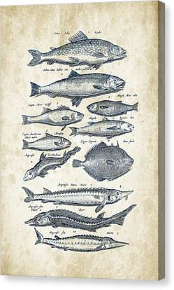 Saltwater Fishing Canvas Print - Fish Species Historiae Naturalis 08 - 1657 - 23 by Aged Pixel