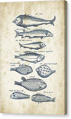 Saltwater Fishing Canvas Print - Fish Species Historiae Naturalis 08 - 1657 - 25 by Aged Pixel