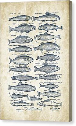 Fish Species Historiae Naturalis 08 - 1657 - 26 Canvas Print by Aged Pixel