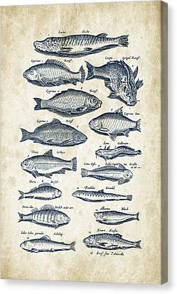Fish Species Historiae Naturalis 08 - 1657 - 29 Canvas Print by Aged Pixel